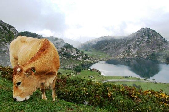 Lagos de Covadonga. Foto de Maria da Luz Moreira. 29.07.2014.