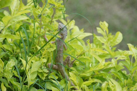 Krishna Ranch: More animals