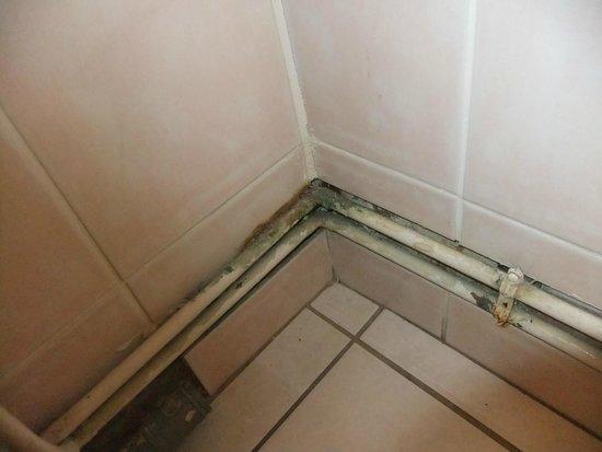 Moisissures salle de bain photo de logis les charmilles - Moisissures salle de bain ...
