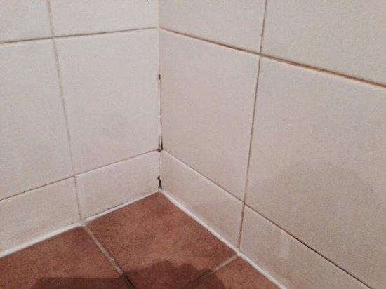 Desert Gardens Hotel, Ayers Rock Resort : mould in shower