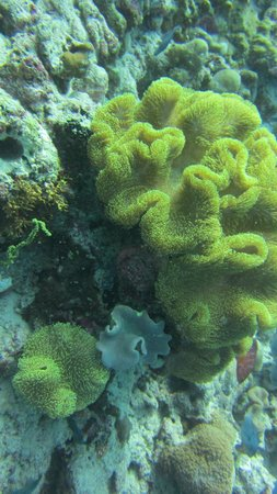 Adaaran Select Meedhupparu : soft corals