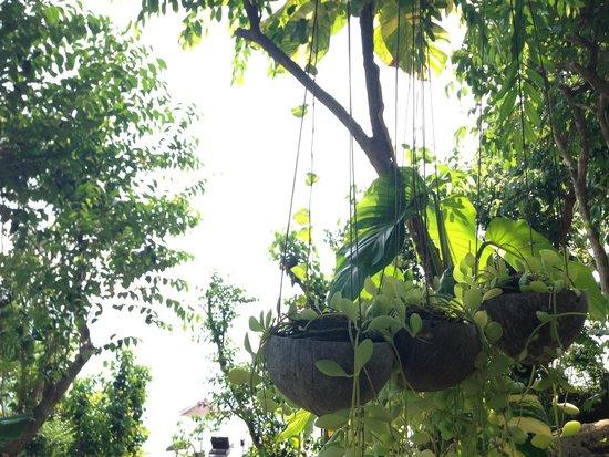 The Kala Samui: Beautiful, unique gardens