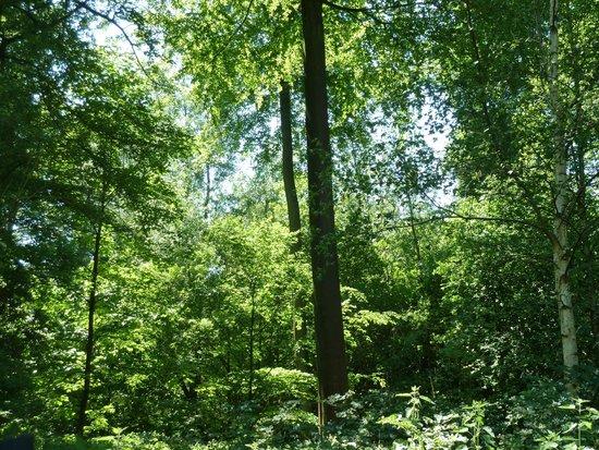 Forêt de Soignes : trees