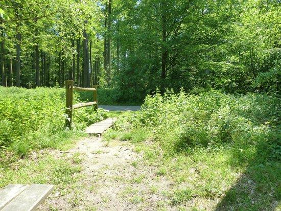 Forêt de Soignes : pic nic spot