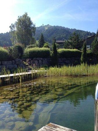 Naturhotel Kitzspitz: The outdoor pool and the Buchensteinwand