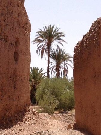 Kasbah Ait Ben Moro : La palmeraie