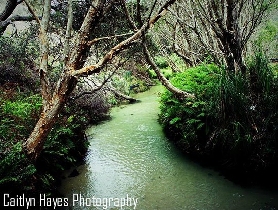 Fraser Explorer Tours: Eli Creek