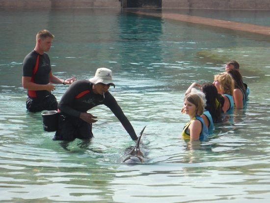 Atlantis, The Palm: Swim with a dolphin