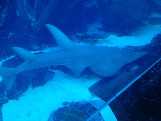 Atlantis, The Palm: Scuba dive with the sharks