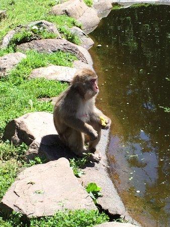 Abenteuer Affenberg tt.: Macaco che lava la sua mela