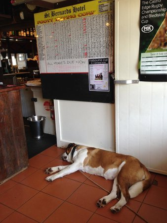 St Bernard's Hotel: Sigh...  it is a hard life being a doggy attraction