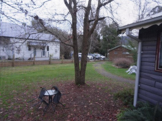 Crossways Historic Country Inn: View out the back