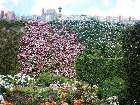 Mercure Blois Centre : Incredible rose garden