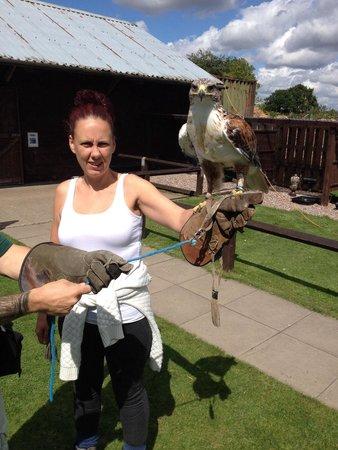 Stockley Farm Birds of Prey Centre: Hawk walk