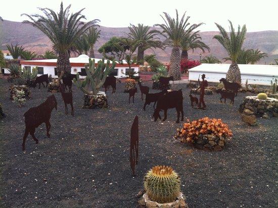 Centro de Arte Canario: Fauna y flora sin primavera