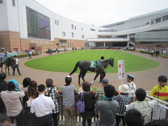 Hakodate Horse Racetrack: パドックです