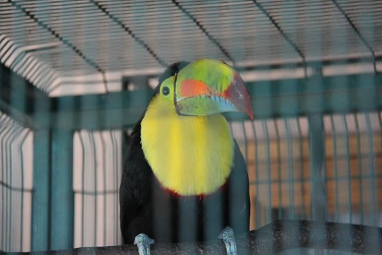 Toucan Rescue Ranch: Toucan