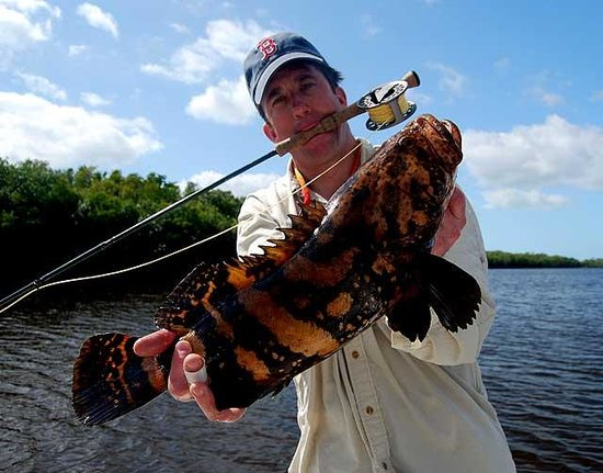 Goliath grouper on fly picture of everglades sight for Everglades fishing guide