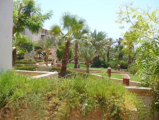 Fort Arabesque Resort, Spa & Villas : Altro Particolare Della Boscaglia dalla veranda!