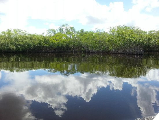 Capt Mitch's - Everglades Private Airboat Tours: Mangroven