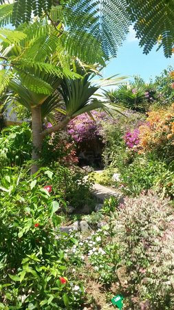 Jardín de Orquídeas de Sitio Litre: Rincon en Sitio Litre