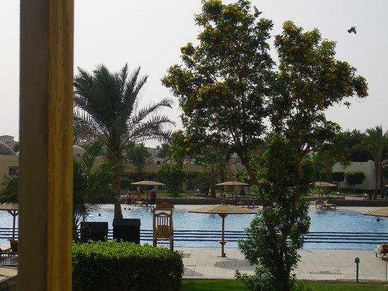 Desert Rose Resort : poolen