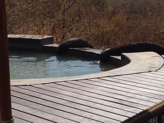 Impodimo Game Lodge: Thirsty Elephants