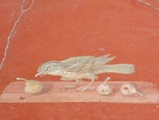 fresco with bird eating figs - Picture of Scavi di Oplontis