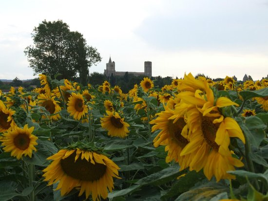 The French House Party, Carcassonne: Sunflower Fields