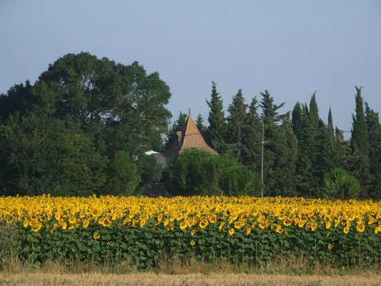 The French House Party, Carcassonne: Sunflower Fields and Chateau
