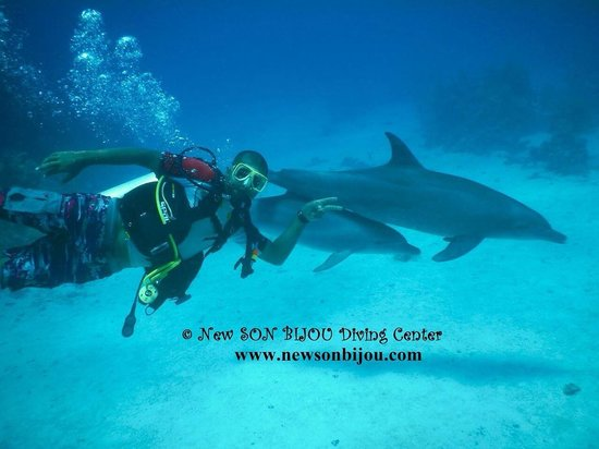 New Son Bijou Diving Center: 110 minutes with playful dolphin
