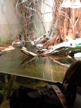 Parc Zoologique de Paris: Zoo de Vincennes 1