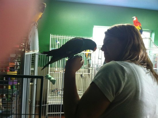 Black Hills Parrot Welfare & Education Center: 2012