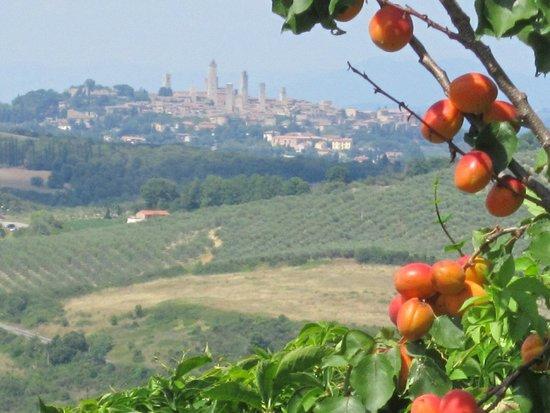 Antico Borgo il Cardino: Zicht op San Gimignano vanuit de tuin