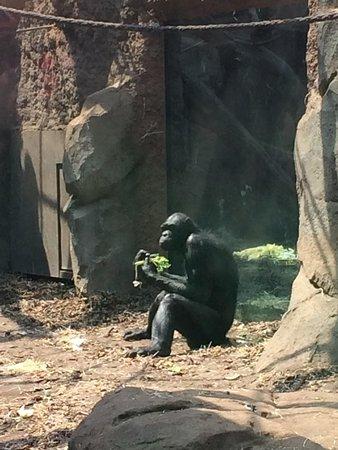 Frankfurt Zoo (Zoologischer Garten Frankfurt/Main) : Deze aap is net een mens of zijn wij net apen?