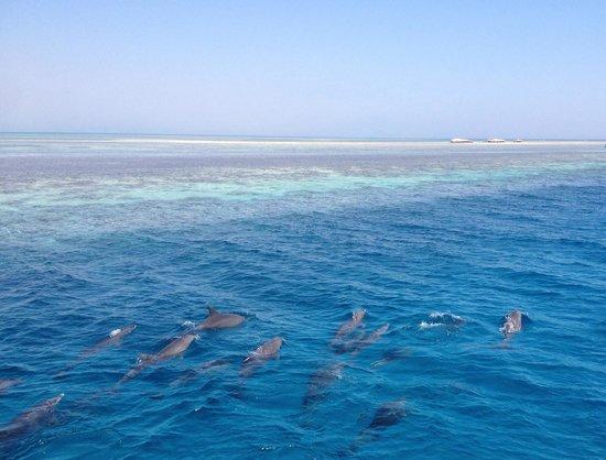 New Son Bijou Diving Center: Dolphins