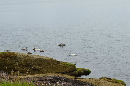 The Glenburn Hotel Ltd: tranquilty of the bay even the swans think so.....