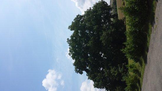 Bastide de Lassalle : Le chêne de 500 ans