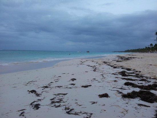 Grand Bahia Principe Turquesa: Playa con bastantes algas