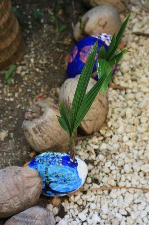 El Dorado Sensimar Riviera Maya: painted coconuts