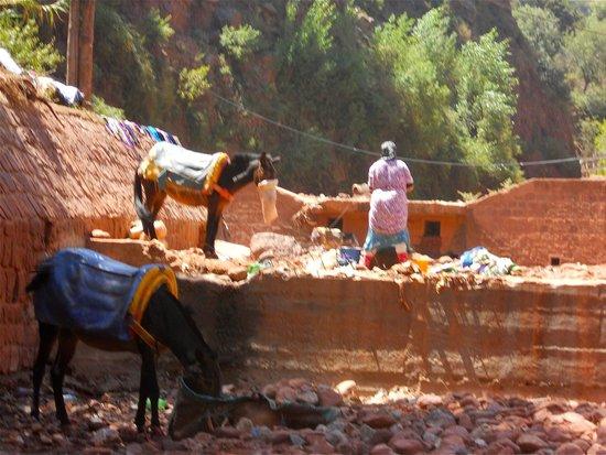 High Atlas Mountains : Repos des ânes à l'arrière des commerces !
