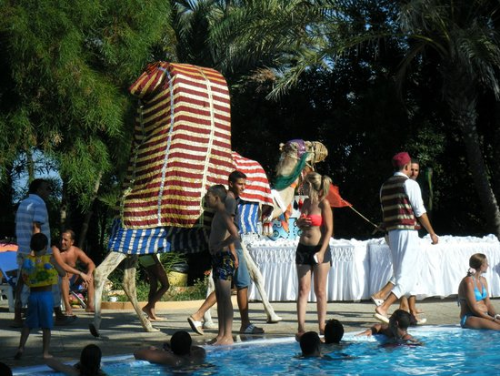 Hotel Vendome El Ksar Resort & Thalasso : Entertainment at the pool in the day - a camel!