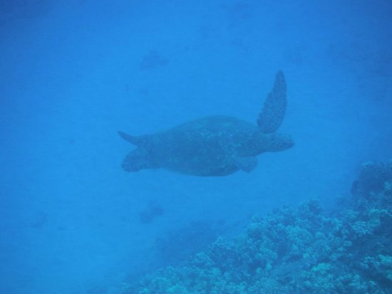 Kai Kanani Sailing Charters: Turtle town