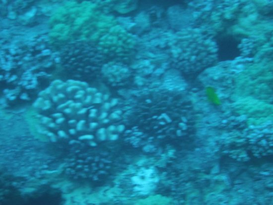 Kai Kanani Sailing Charters: Coral