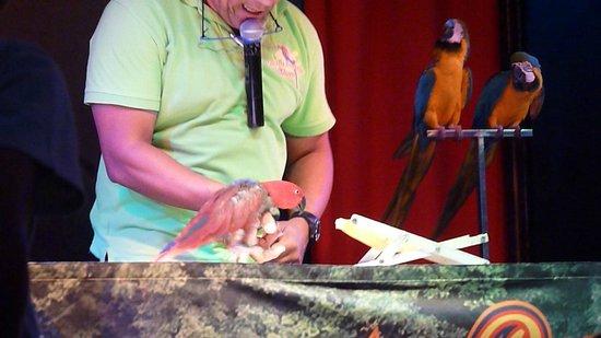 Tagoro Family & Fun Costa Adeje: spectacle de perroquets
