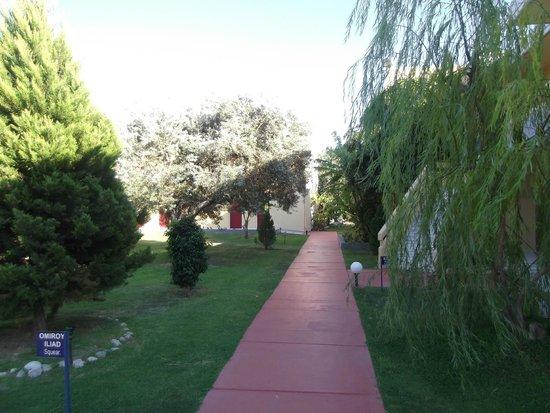 Golden Odyssey Kolimbia : Lots of trees