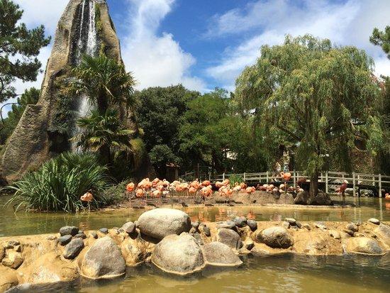 La Palmyre Zoo : Zoo de PALMYRE juste magnifique ��