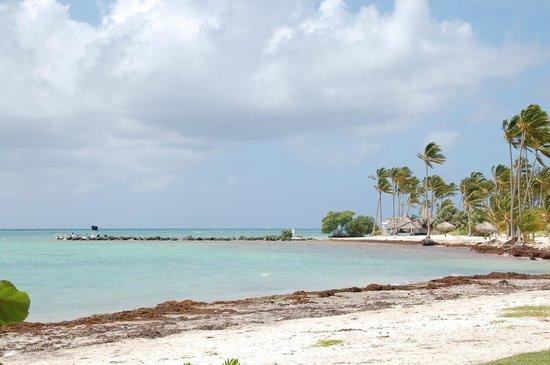 Tortuga Bay Hotel Puntacana Resort & Club: View of the beach