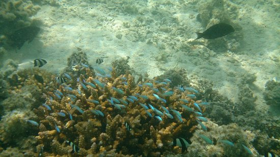 Amuri Sands, Aitutaki: Snorkelling, just a few metres from the cabins