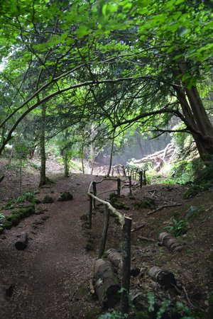 Puzzlewood: Entrance to woods